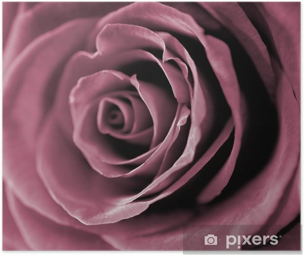 Red rose closeup photo. Self-Adhesive Poster - Themes