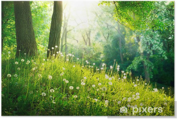 Spring Nature. Beautiful Landscape. Green Grass and Trees Self-Adhesive Poster - Destinations