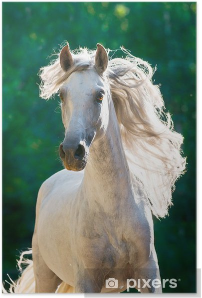 White horse runs gallop front Self-Adhesive Poster - Themes