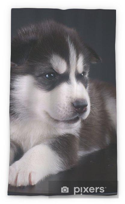 Cute Siberian Husky Puppy Sheer Window Curtain Pixers We Live