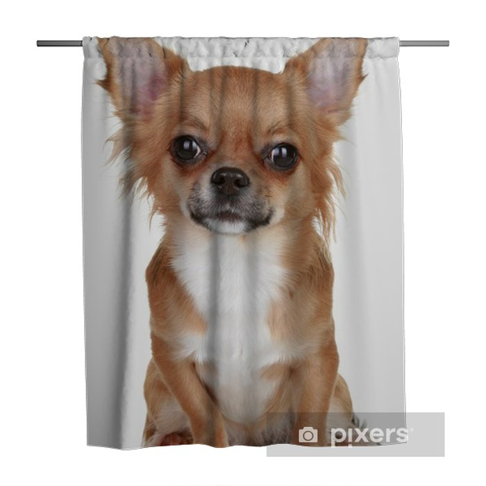 Brown Long Haired Chihuahua Puppy Shower Curtain