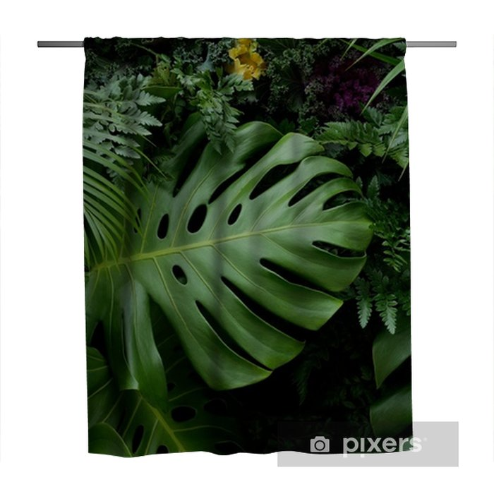 Green Tropical Leaves Monstera Palm Fern And Ornamental Plants Backdrop Background Shower Curtain Pixers We Live To Change This large and dramatic plant, monstera deliciosa, or split leaf philodendron, is a beautiful addition to any home. pixers