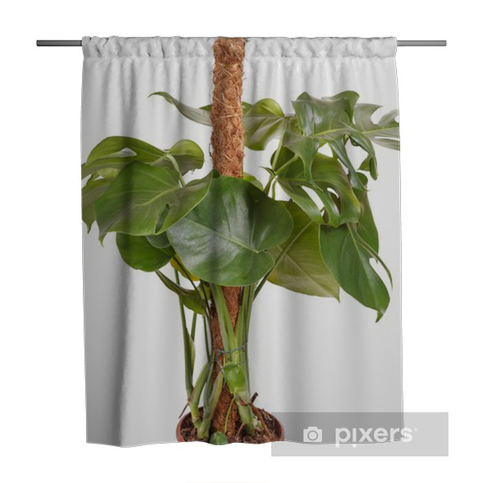monstera plant shower curtain