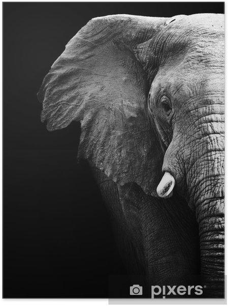 Självhäftande Poster Elephant Close Up - Stilar