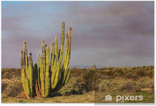 Självhäftande Poster Kaktus i Mexiko - Amerika