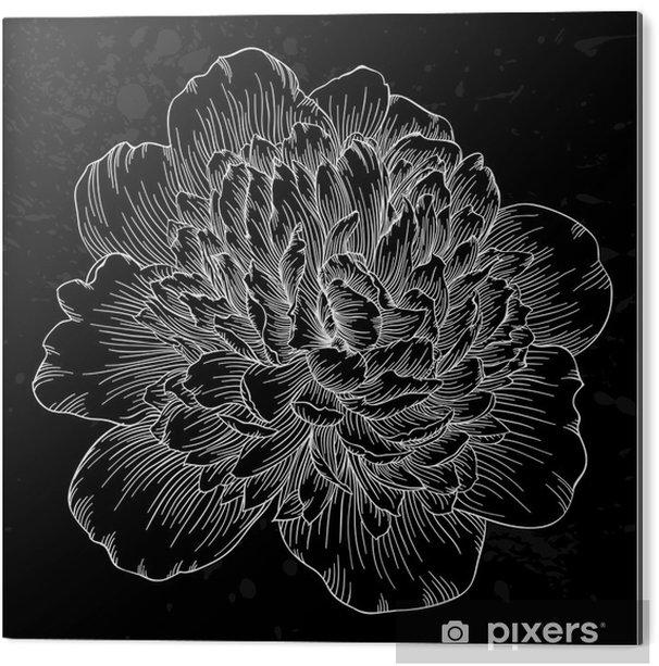 Tableau Alu-Dibond Belle fleur de pivoine noir et blanc isolé sur fond. lignes de contour et coups dessinée à la main. - Fleurs et plantes