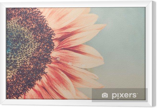 Tableau encadré Coup de macro de floraison tournesol - Plantes et fleurs