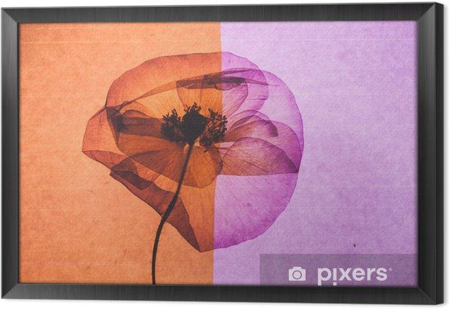 Tableau encadré Jolie fleur - Plantes et fleurs