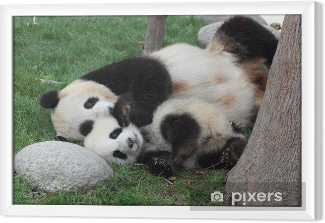 Tableau encadré Panda géant avec son petit sommeil sur l'herbe - Thèmes