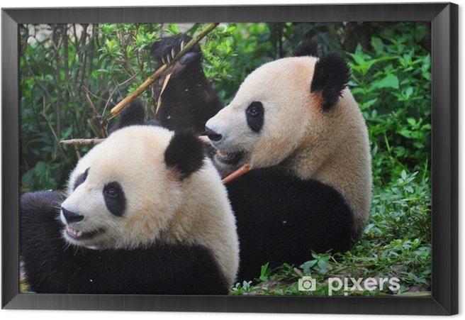 Tableau encadré Panda paire - Thèmes