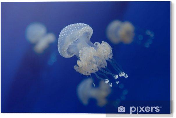 Tableau Plexiglas Medusa méduses sous-marine photo de plongée egypte mer rouge - Animaux
