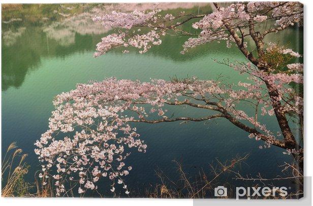 Tableau sur toile 湖面 の 桜 - Saisons
