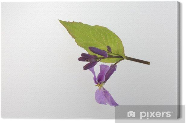 Tableau sur toile ム ラ サ キ ハ ナ ナ - Fleurs