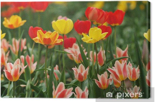 Tableau sur toile チ ュ ー リ ッ プ _ 混成 咲 き - Fleurs