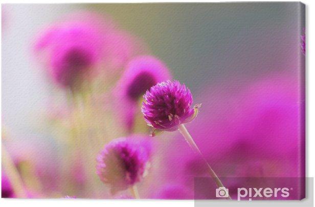 Tableau sur toile 紫 の 千 日 紅 - Saisons