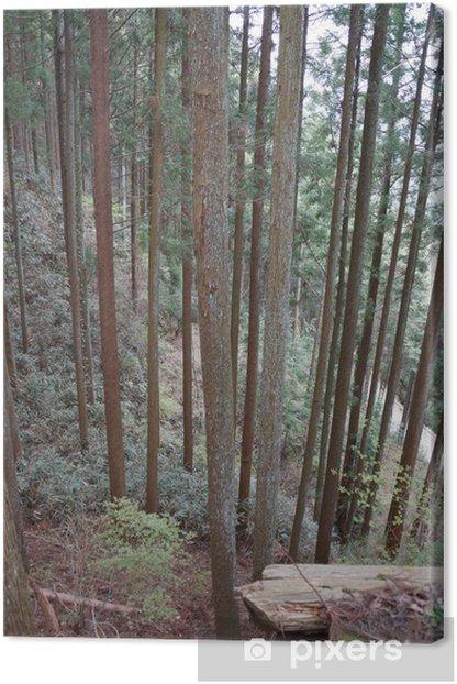 Tableau sur toile 吉野 杉 - Arbres