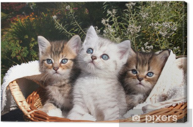 Tableau sur toile 3 tomcat - Thèmes