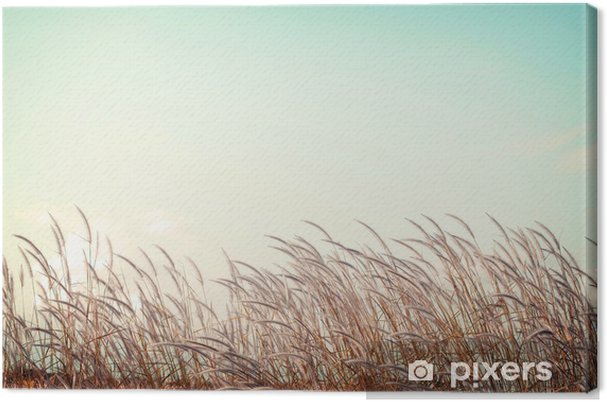 Tableau sur toile Abstraite nature vintage background - douceur herbe plume blanche avec rétro espace de ciel bleu - Paysages