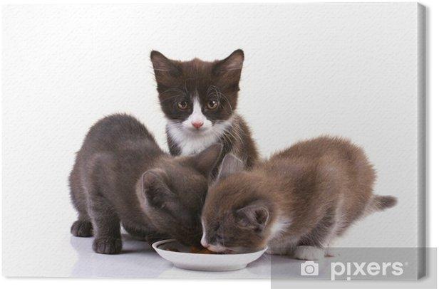 Tableau sur toile Adorables chatons manger - Destin