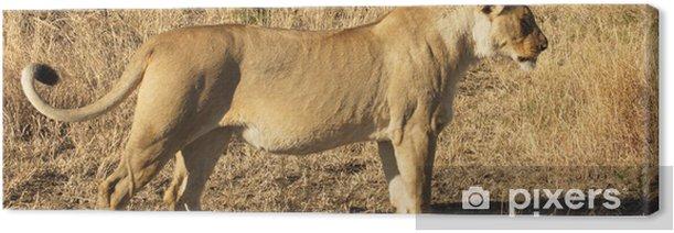 Tableau sur toile African Lion du Sud - Thèmes