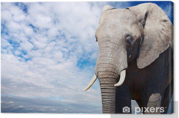 Tableau sur toile Afrique elephant - Ciel