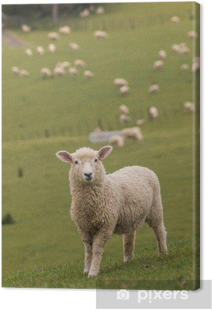 Tableau agneau 1 tableaux sur toile agneau avec troupeau de moutons en arriere plan