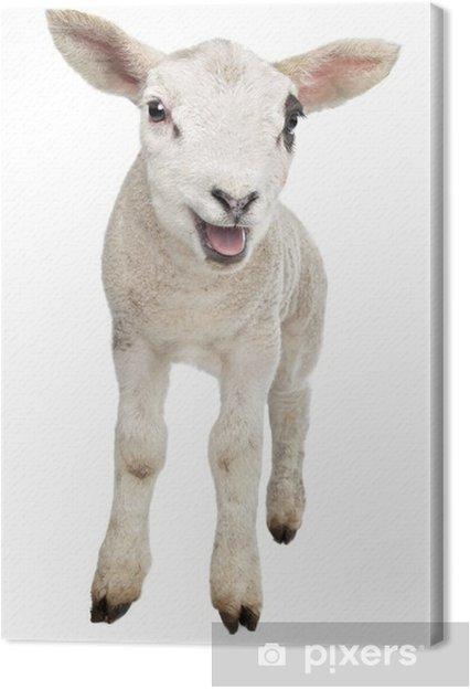 Tableau toile agneau 1 tableaux sur toile agneau