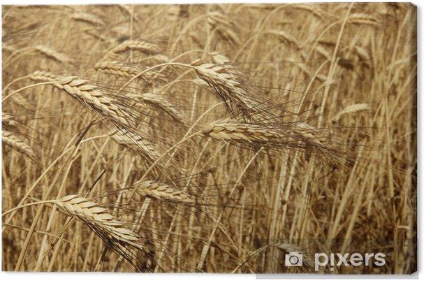 Tableau sur toile Agriculture blé doré séchée fiels cultures - Agriculture