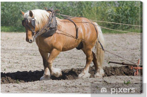 Tableau sur toile Agriculture et métier : paysan et cheval de trait au labours - Agriculture