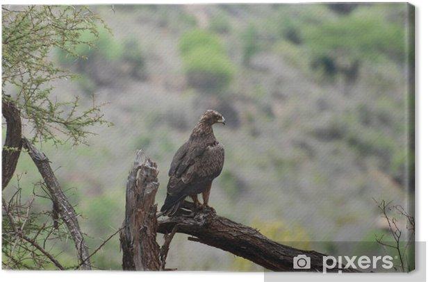 Tableau sur toile Aigle (Aquila nipalensis orientalis) - Oiseaux