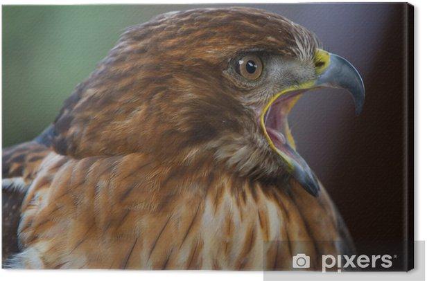 Tableau sur toile Aigle impérial - Oiseaux