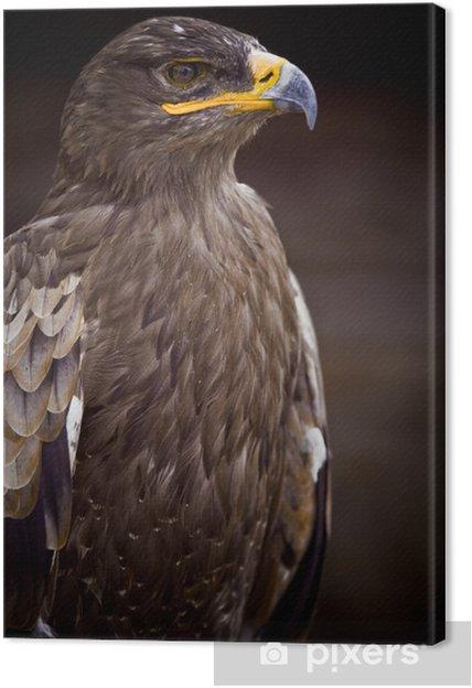 Tableau sur toile Aigle oiseau rapace roi fier tête bec plume buste regard - Thèmes