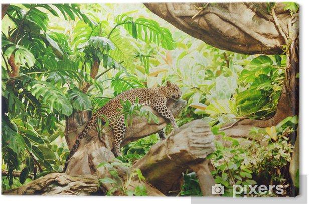 Tableau sur toile Allongé (sommeil) Leopard sur une branche d'arbre - Thèmes