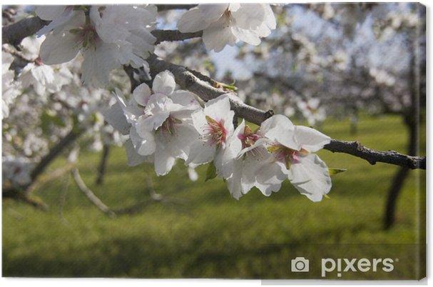 Tableau sur toile Almond fleurs - Arbres