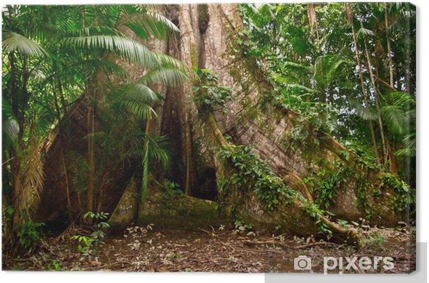 Tableau sur toile Amazon Junge - Brésil
