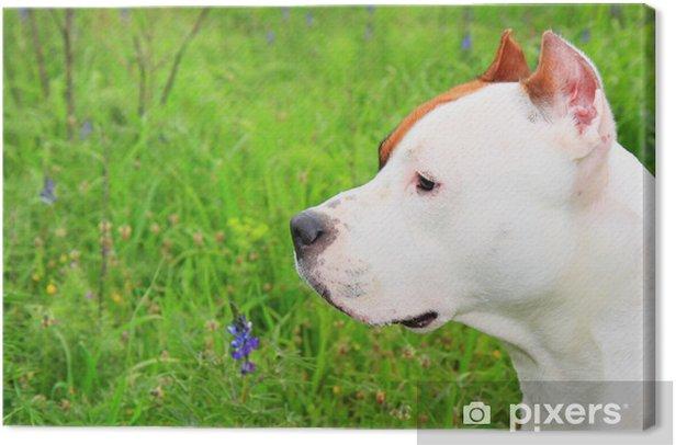 Tableau sur toile American staffordshire terrier - Mammifères