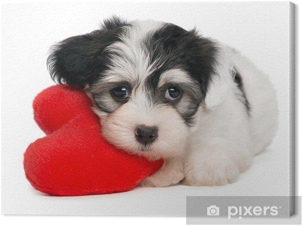 Tableau sur toile Amoureux Valentine Bichon Havanais chiot avec un coeur rouge - Bonheur