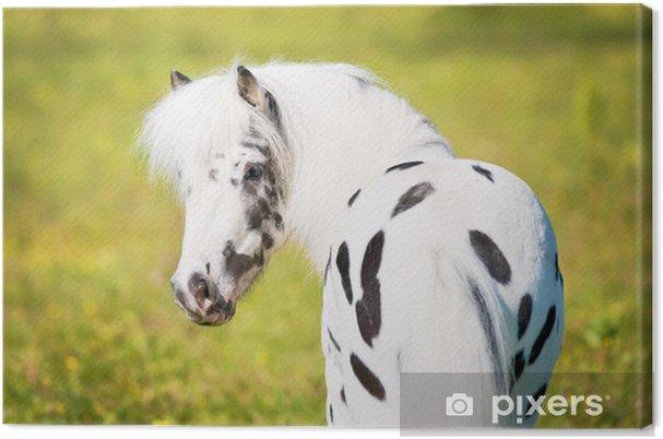 Tableau sur toile Appaloosa pony portrait - Sports individuels