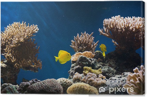 Tableau sur toile Aquarium avec des poissons et des coraux - Animaux marins