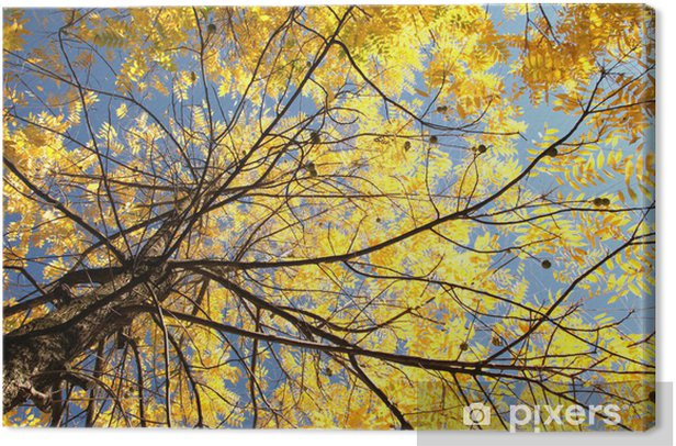 Tableau sur toile Arbre d'automne - Saisons