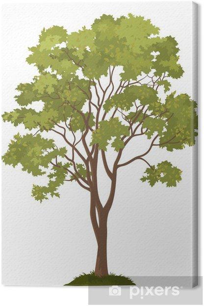 Tableau sur toile Arbre d'érable et l'herbe verte - Merveilles naturelles