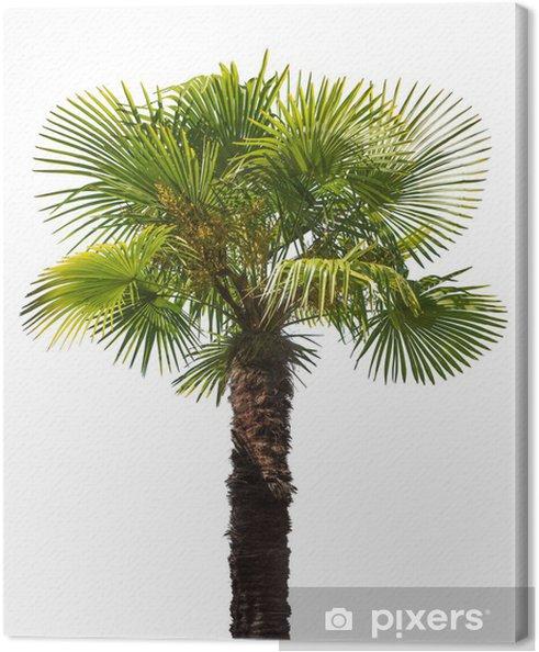 Tableau palme vert 4 tableaux sur toile arbre vert petite de palme isole sur blanc