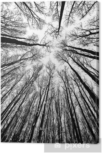 Tableau sur toile Arbres en noir et blanc des silhouettes - Styles
