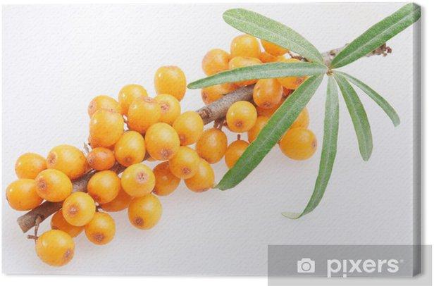 Tableau sur toile Argousier sur un fond blanc. - Fruits