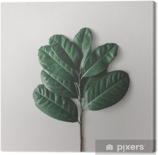 Tableau sur toile Arrangement minimal créatif de feuilles sur fond blanc clair. pose à plat. concept de nature. - Plantes et fleurs