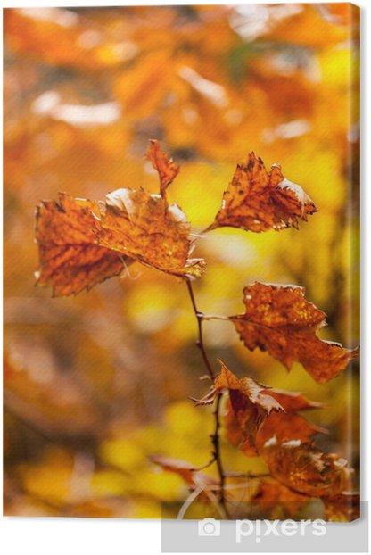 Tableau sur toile Autumn park - Bâtiments publics