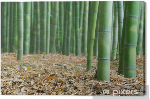 Tableau sur toile Bamboo の paysage - Plantes