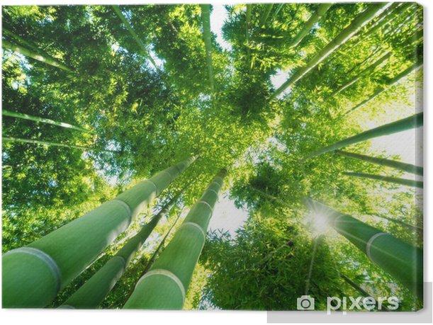 Tableau sur toile Bambou foret - Thèmes