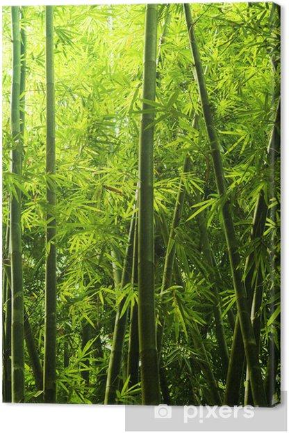 Tableau sur toile Bambou foret -