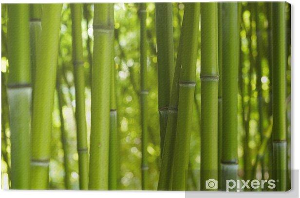 Tableau sur toile Bambus Bamboo 06 - Thèmes